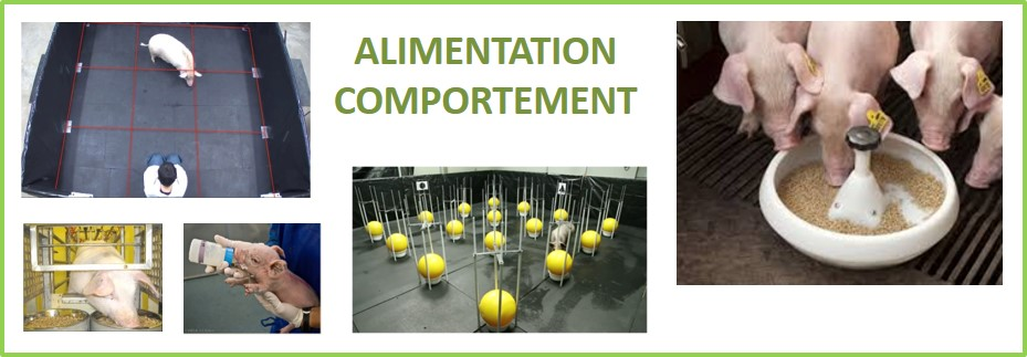 alimentation comportement